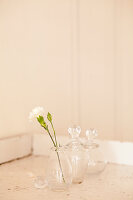 White carnation in glass carafe