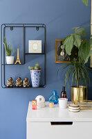 Ornaments and houseplants on metal shelves on blue wall
