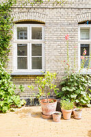 Pflanzen in Terracottatöpfen vor der sonnigen Hauswand