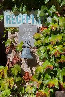 Sign on climber-covered façade (Le Mas du Naoc, Cabris, France)