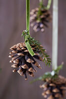 Pine cones hung from green velvet ribbons