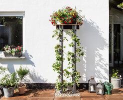 DIY-Pflanzenständer mit Erdbeeren und Blumen