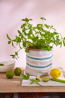 A DIY linen bag for a herb pot