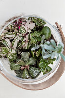 Top view of various succulents in glass jar