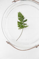 Fern leaf in jar with handle seen from above