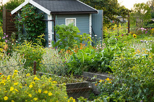 Vegetable Garden With Raised Beds And Garden Shed