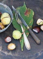 Vintage cutlery on horse chestnut leaf scattered with horse chestnuts