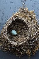 Vogelnest aus Moos und Reisig mit grünem Ei darin
