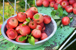 Freshly picked red apples in a bowl on a garden bench