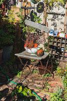 Arrangement of pumpkins on old garden chair