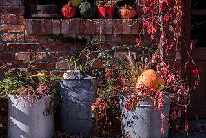 Autumn Arrangement With Big Zinc Buckets, Wild Wine And Pumpkin