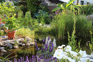 Garden pond with marsh plants on the terrace