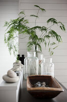 Asparagus fern in old glass bottle and arrangement of pebbles in wooden trough