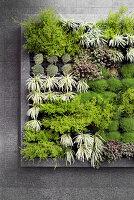 Vertikale Bpflanzung