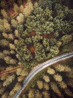 Bird's-eye view of road running through woods