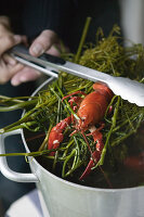 Lobster and dill being lifted from pan in tongs