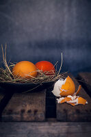 Easter eggs coloured with organic dyes in a nest with egg shells in the foreground