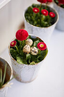 Three quail eggs in flower pot planted with red bellis daisy