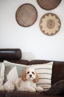 Hund auf braunem Ledersofa mit Kissen