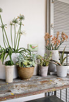 Various potted plants on vintage metal shelves on terrace