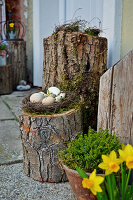 Eggs in Easter nest on tree stump