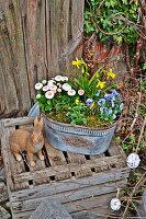 Osterhase neben Zink-Jardiniere mit Frühlingsblumen