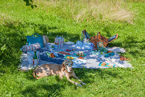 Dog lying next to hand-sewn accessories and snacks on picnic blanket
