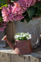 Rusty metal watering can decorated with copper wire and used as planter