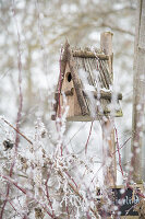 Nesting box in wintry garden