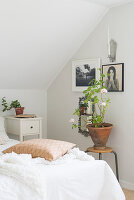 Geranium on stool and black-and-white photos on wall next to bed in bright attic bedroom