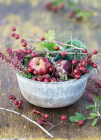 Metal bowl filled with haws, apples, Savoy cabbage and heather