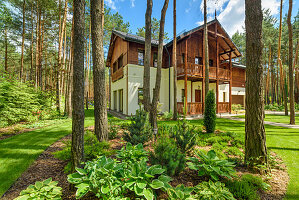 Country house in clearing of pine woods