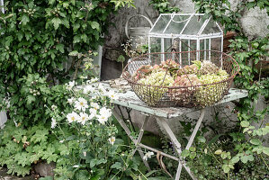 Wire basket of hydrangeas on shabby-chic garden table