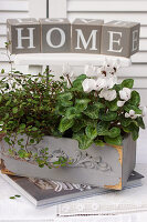 White cyclamen and maidenhair vine planted in wooden trough