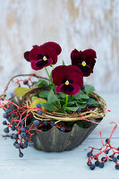 Violas in old cake tin with wreath of twigs and Virginia creeper berries