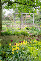 Flowering tulips and pergola in garden (district teaching garden, Steinfurt, Germany)