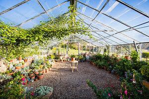 Großes Gewächshaus mit Kiesbett und Zierpflanzen in Pflanztöpfen