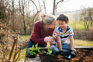 Mother and son planting lettuces in raised bed