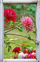 Dahlias in window frame