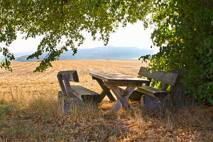 Rustic wooden table and benches under lime tree with bare fields in background