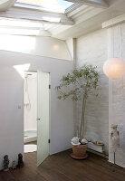 Olivenbaum vor der Glastür zum Bad mit Dachfenster
