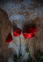 Rote Mohnblumen auf rostigem Untergrund