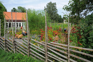 Typical Scandinavian wooden fence in flowering cottage garden
