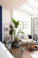 Spindly, black metal furniture and bird of paradise plant in conservatory
