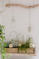 Autumnal arrangement in long wooden planter below ornaments hung from branch