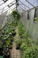 Gemüseanbau im Gewächshaus