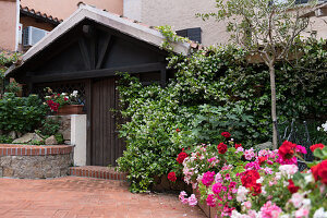 Bed with blooming geraniums, wall overgrown with jasmine