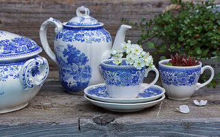 Old English china with hawthorn blossom and houseleeks