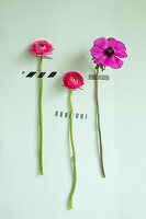 Hot-pink flowers with stems stuck on green wall