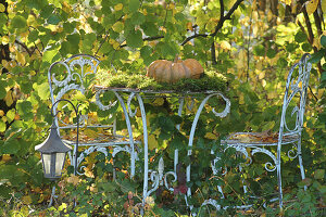 Muscat pumpkin and moss in seating area of autumnal garden
